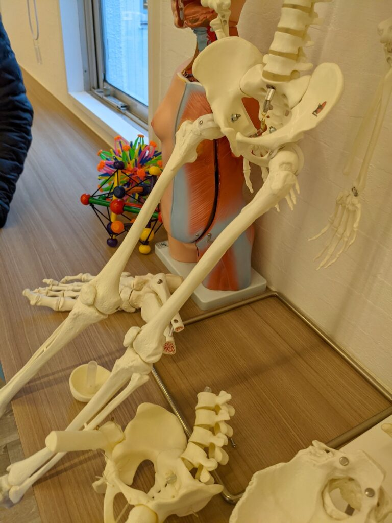 骨格模型とNinja Anatomy
